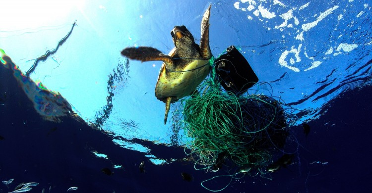 Entangled turtle © Greenpeace / Carè / Marine Photobank