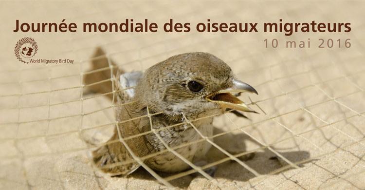Poster de la Journée mondiale des oiseaux migrateurs 2016