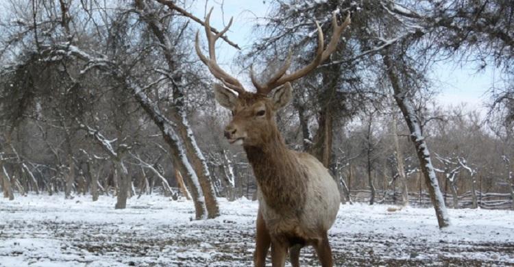MoU on Bukhara Deer