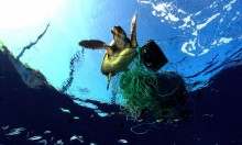 Tortue empêtrée © Greenpeace / Carè / Marine Photobank