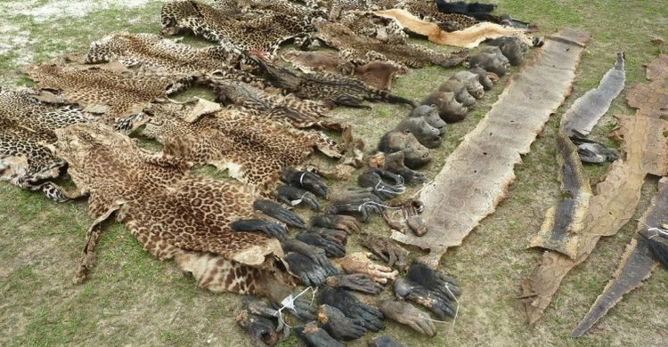 leopard skins and gorilla hands © Conservation Justice