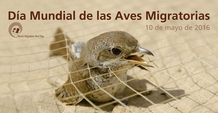 Día Mundial de las Aves Migratorias Cartel 2016
