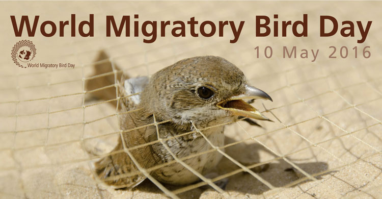 World Migratory Bird Day Poster 2016
