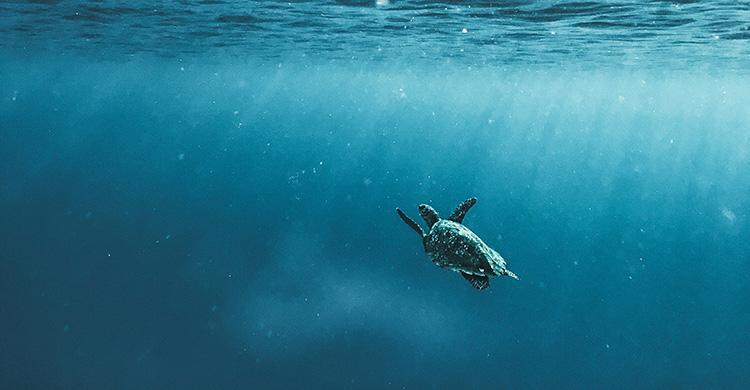Hawksbill Turtle © Naja Bertolt-Jensen/Unsplash.com