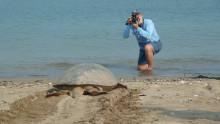 Dr Col Limpus - recording green turtle nesting on Diamond Island, Myanmar, in 2012