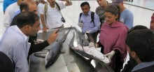 Shark identification training for workshop participants at the fish market provided by Dr. Rima Jabado