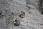 empty turtle shells