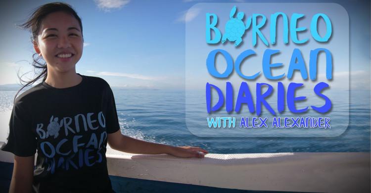 Borneo Ocean Diaries © Scubazoo