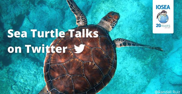 Twitter Sea Turtle Talks