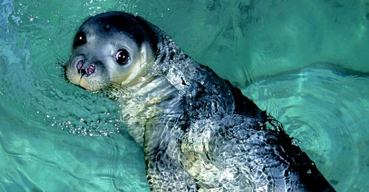Critically endangered Monk-seal pup rescued