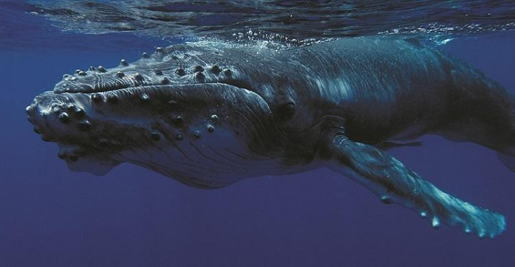 Fisheries Service to Protect Whales and Dolphins