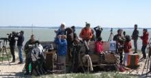 World Migratory Bird Day, Pointe de Grave