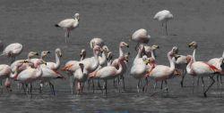 Flamingos © CONAF