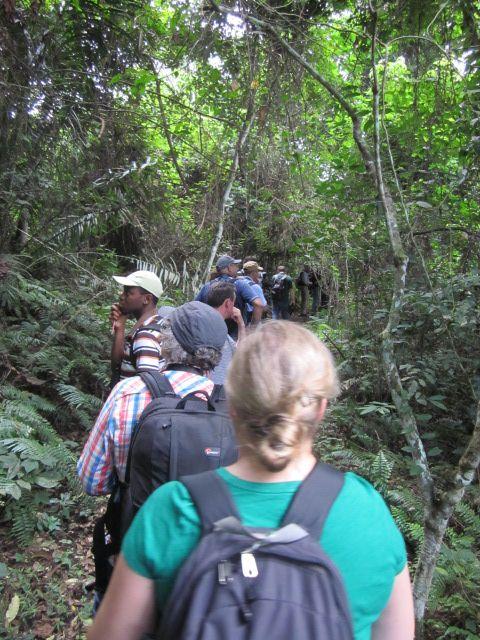 participants walking through the Kakum National Park © R Vagg UNEP/CMS