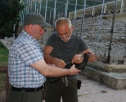Taner Hatipoglu and Lubomir Peske preparing a tagged ibis for release © Chris Bowden, RSPB