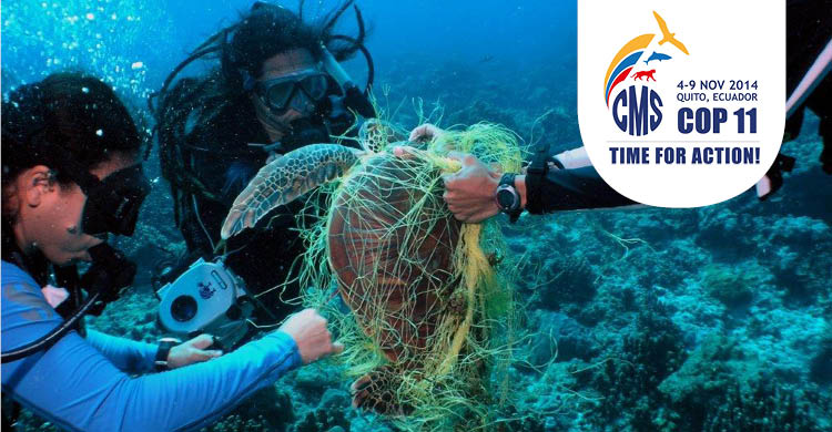 Entangled turtle in fishing gear  © Courtesy NOAA, NMFS permit 932-1905
