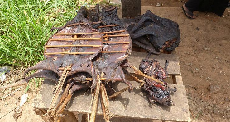 Bushmeat @ Wikipedia Commons