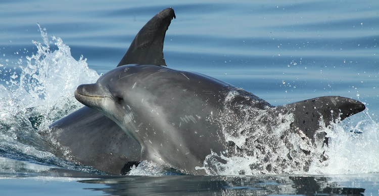 Solomon Islands villagers kill 900 dolphins