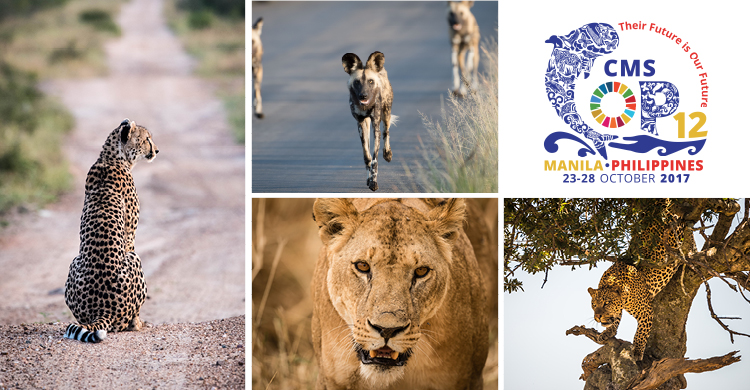 Cheetah © John Birch; Wild Dogs © John Birch; African Lion © Jacques-Andre Dupont; Leopard © Nick Dale