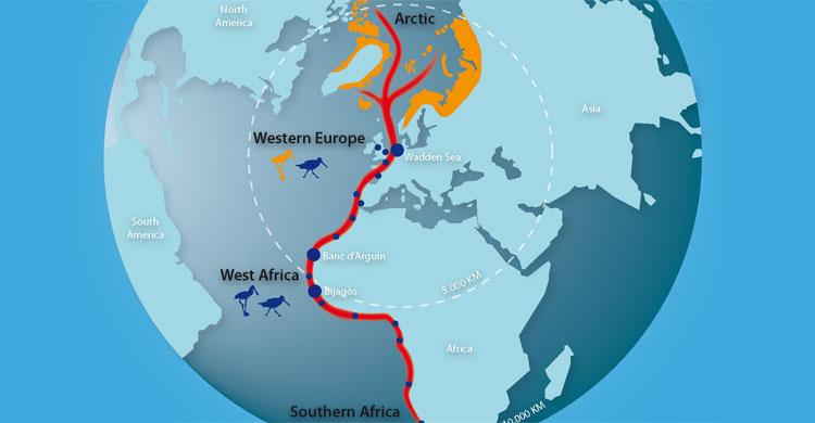 The East Atlantic Flyway © Wadden Sea Flyway Initiative (WSFI)