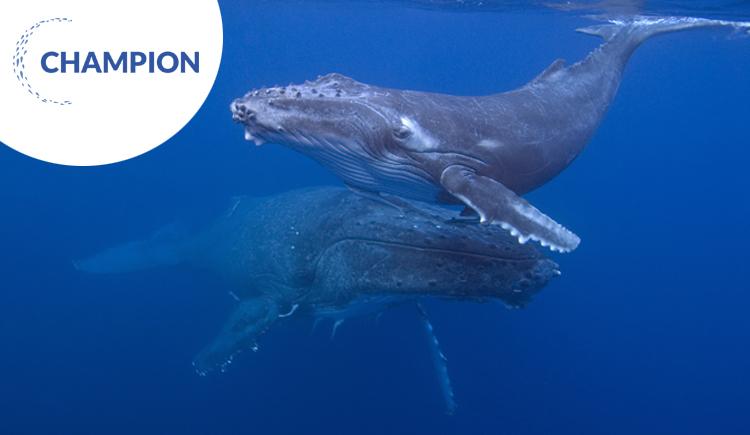 Humpback whale and calf © Glenn Edney/grida.no