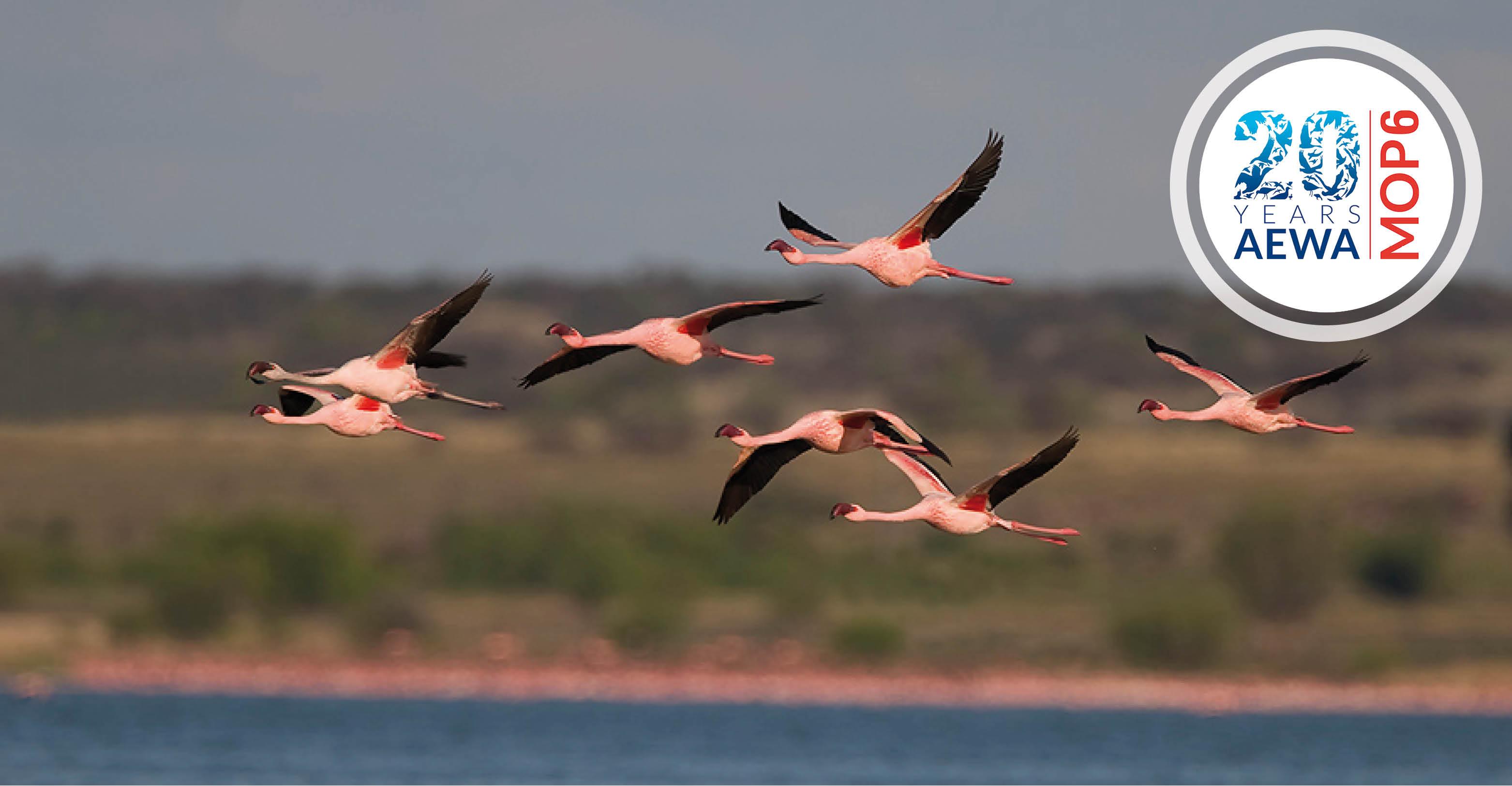 Lesser Flamingos © Mark D. Anderson