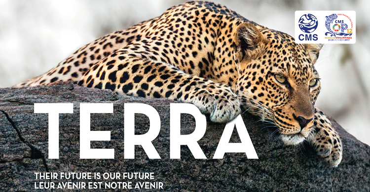 TERRA - a Pictorial Impression of Proposed CMS Species