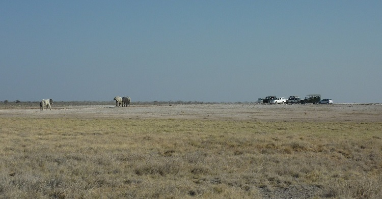 Wildlife Watching in Etosha National Park © N.Epler