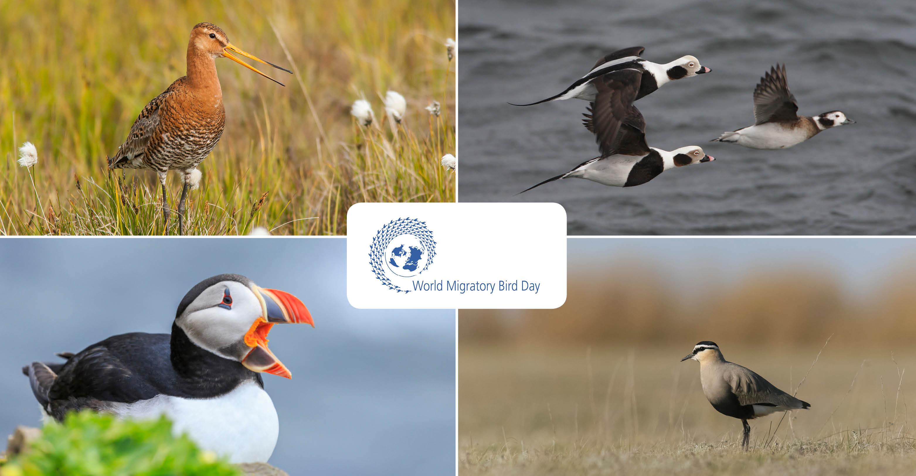 ONU emite serie especial de sellos sobre especies migratorias