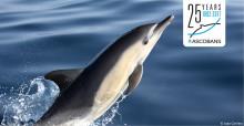 Joao Corvina © Common Dolphin
