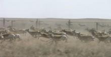 Mongolian Gazelles at border fence  © Badamjav Lkhagvasuran