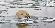 Polar bear testing melting sea ice, Svalbard © Peter Prokosch, GRID ARENDAL