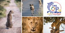 Cheetah © John Birch; Wild Dogs © John Birch; African Lion © Jacques-Andre Dupont; Leopard © Nick Dale