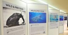 Wild and Precious Exhibition  © IISD