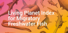 Living Planet Index - Freshwater Fish
