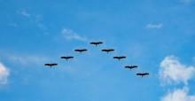 Flying birds © pixabay.com