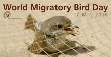 World Migratory Bird Day Poster 2016