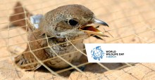 Bird trapped in a net found along the Egyptian coast © Holger Schulz