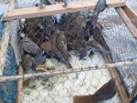Caged different bird species © Basem Rabia