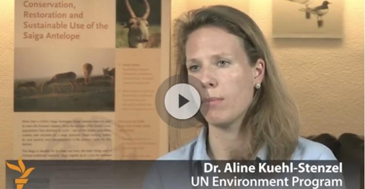 Dr. Aline Kühl-Stenzel interviewed on the Saiga sudden die off