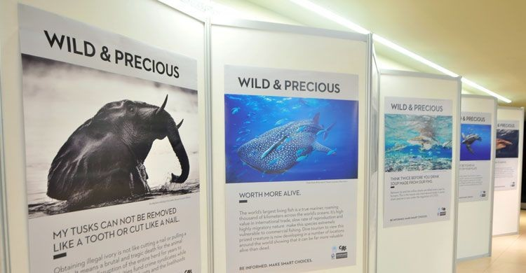 Wild and Precious Exhibition  © IISD