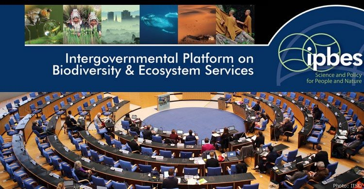 IPBES Plenary at the WCCB in Bonn | Photograph courtesy of IISD/Earth Negotiations Bulletin