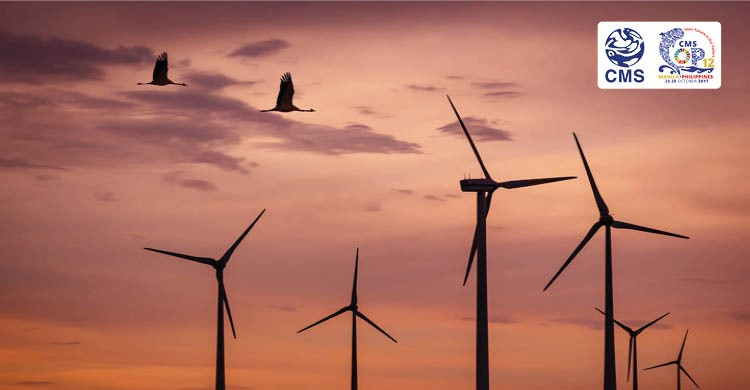 Renewable energy technologies must be deployed in a way that they do not harm wildlife