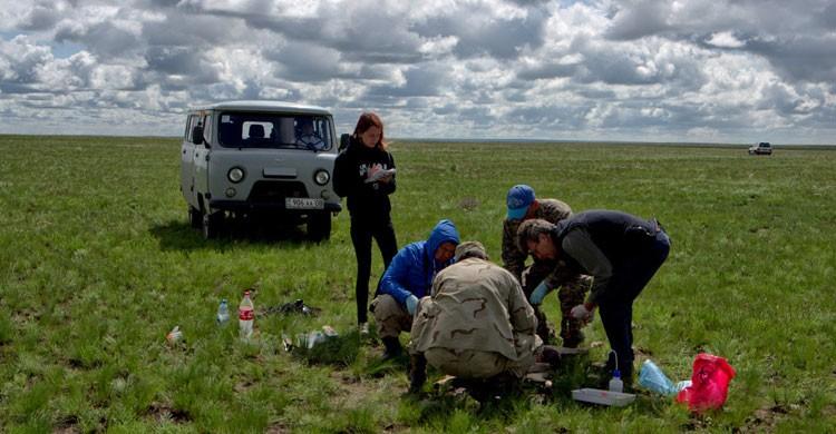 200,000 Saiga Antelopes died in Kazakhstan in May 2015 © Sergei Khomenko