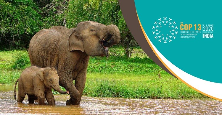 Indian Elephants © Amila Tennakoon