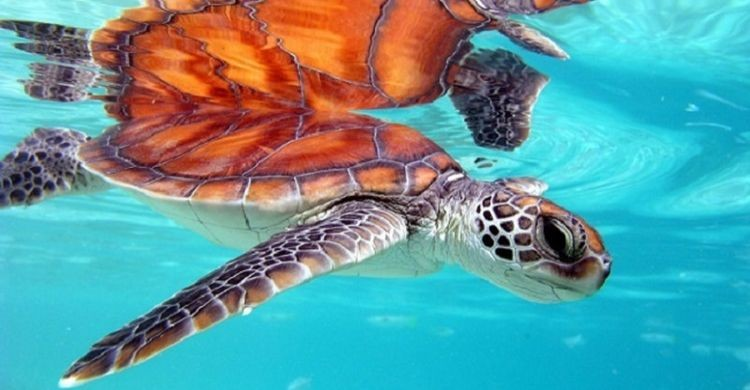 © Pierre Lesage flickr