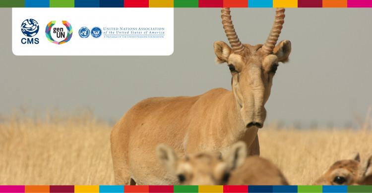 Saiga Antelope © Navinder Singh