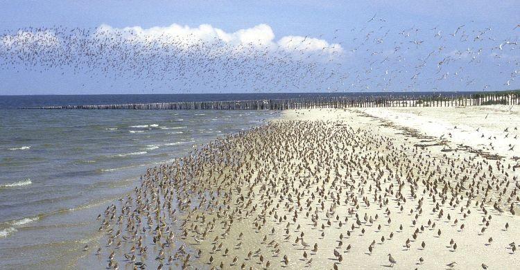Wadden Sea © Jan van der Kam