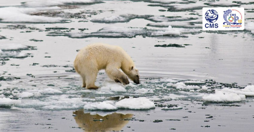 Opinion: In Climate Change Discussion, Don't Forget about Wildlife