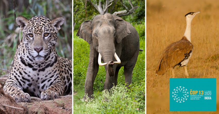 CMS COP13 Concludes in India With Major New Actions for Migratory Species